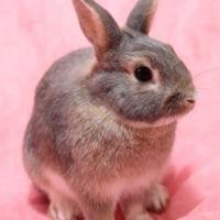 うさぎ ブログ キキ 動物病院 大阪 堺
