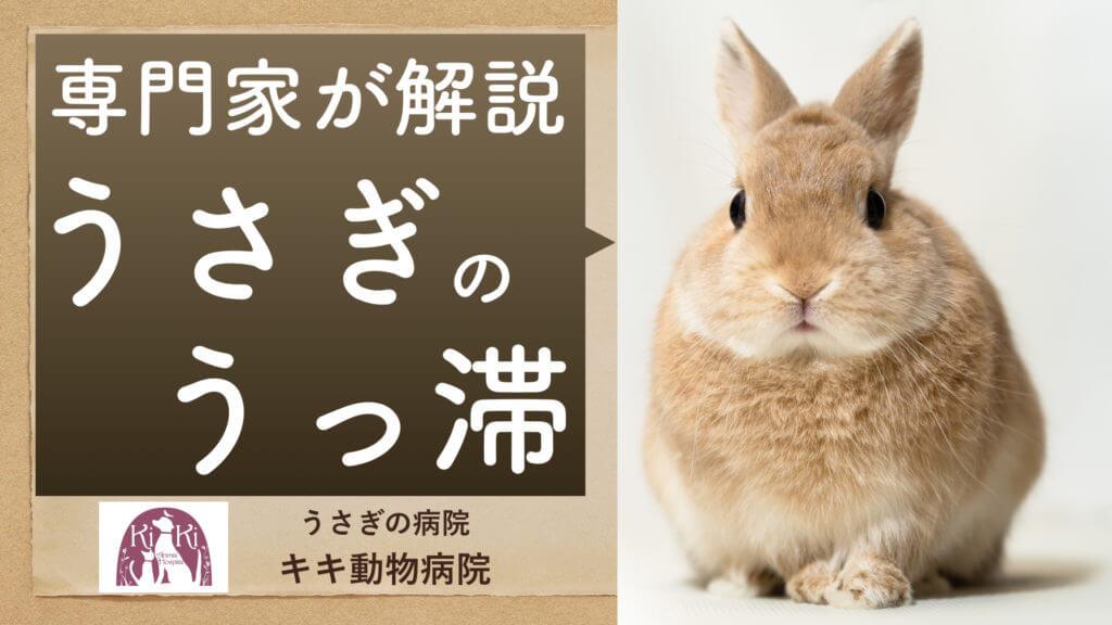 うさぎ のうっ滞(歯ぎしり、毛球症、食欲不振など)【大阪堺のうさぎ病院】