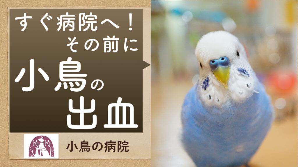 小鳥 の病院 出血(救急)の対処【大阪府堺市の動物病院】
