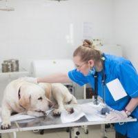 獣医師 仕事中の写真