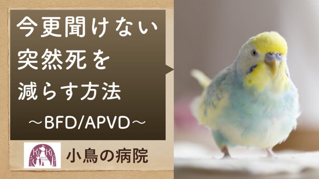 インコ の 突然死 を減らす方法 :BFD/APVD【大阪 堺 小鳥の病院】