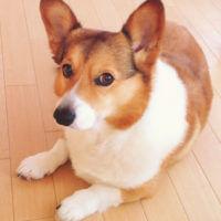 犬 皮膚病 アトピー 大阪府堺市キキ動物病院