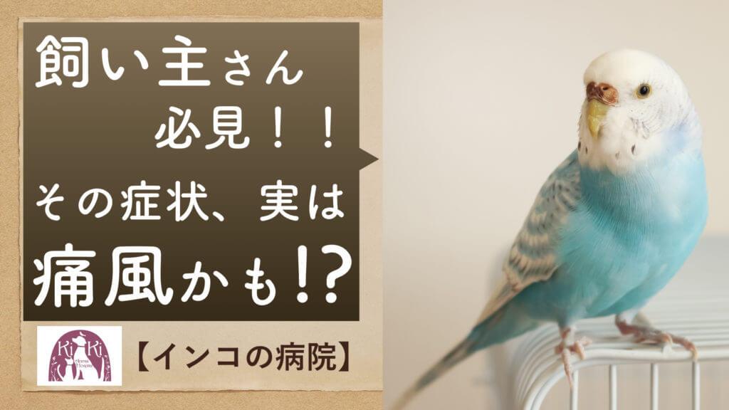 インコ の病院【痛風】大阪堺の統合医療動物病院