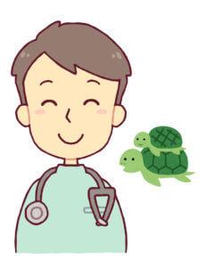獣医師と亀のイラスト