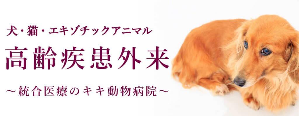 高齢疾患外来。統合医療のキキ動物病院。
